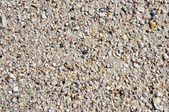 Seashells on the Beach Royalty Free Stock Photography