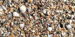 Seashells on the beach on a sunny day. Background royalty free stock image