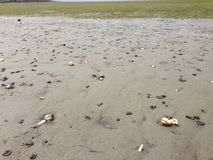 Seashells on beach. Taken during low tide at Aramoana, Dunedin Royalty Free Stock Image