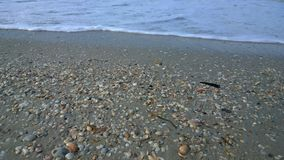 Seashells on beach Royalty Free Stock Image
