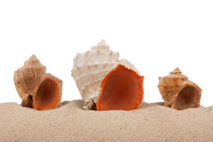 Seashells on beach  on a white background Royalty Free Stock Photography