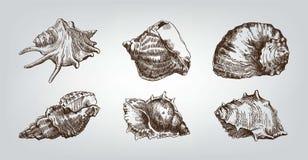Seashells Stock Photo