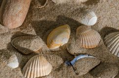 Seashells. Beautiful seashells in the sand royalty free stock image