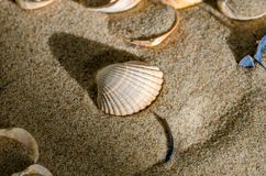 Seashells. Beautiful seashell in the sand stock photography