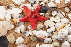 Seashells belli contro Fotografia Stock Libera da Diritti