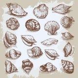 Seashells big set hand drawn vector vintage sketch Stock Image