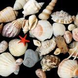 Seashells on black background Stock Image