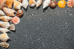 Seashells on the black background of the water Royalty Free Stock Photography