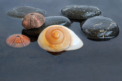 Seashells in black water Stock Photography