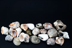 Seashells on the black. White seashells on the black background royalty free stock photography