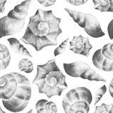 Seashells 2. Seashells. Black and white watercolor background. Seamless pattern Royalty Free Stock Photo