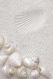 Seashells blancos en la arena blanca Foto de archivo libre de regalías