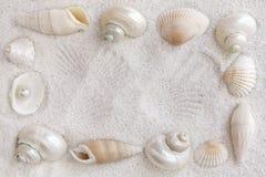 Seashells blancs images libres de droits