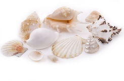 Seashells blancs Photos libres de droits