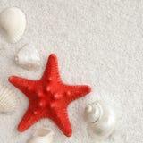Seashells blancs et seastar rouge image stock