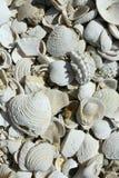 Seashells blancs multiples photographie stock
