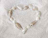 Seashells blancs sur le sable blanc image stock