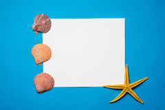 Seashells on blue background. Copy space for your text. Stock Photography