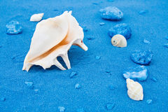 Seashells and blue sands Stock Photos