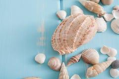 Seashells on blue wood, sea vacation background Stock Image