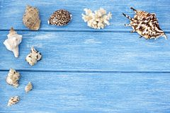 Seashells on a blue wooden background, blue royalty free stock photo