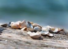 Seashells bonitos imagem de stock