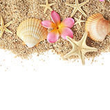 Seashells border Royalty Free Stock Photo