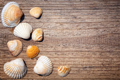 Seashells border on vintage wood Stock Photos