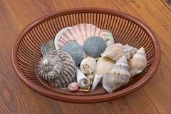Seashells in bowl. Collection of seashells in bowl Royalty Free Stock Photo
