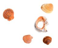 Seashells and broken rapana Royalty Free Stock Photo