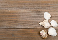 Seashells on brown wooden boards Royalty Free Stock Photography