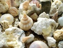 Seashells. Bunched together seashells Stock Photo