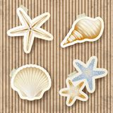 Seashells on cardboard background Stock Photos