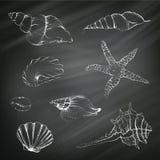 Seashells on a Chalkboard Background Royalty Free Stock Photo