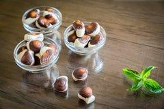 Seashells chocolates stock photos