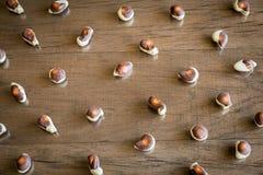 Seashells chocolates stock image