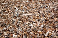 Seashells and clams on coastal sands royalty free stock images