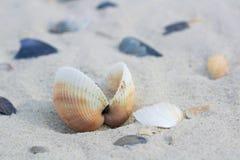 Seashells and clams on coastal sands, sandy seascape stock photos