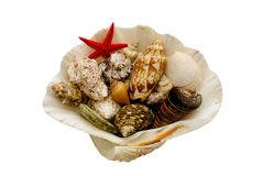 Seashells with clipping path. Various seashells and a starfish contained in a larger shell. Isolated with clipping path Stock Photos