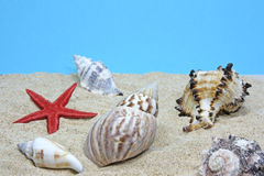 Seashells close-up. On sand on blue background Stock Photography