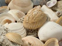 SeaShells Close-up. This is a detailed close-up of some seashells royalty free stock image