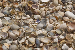 At the seashells close-up. The day off at the beach. Seashells by the sea Royalty Free Stock Photos