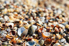 Seashells closeup Stock Photo