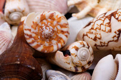 Seashells closeup Stock Photos