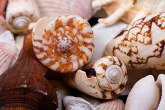 Seashells closeup stock photos