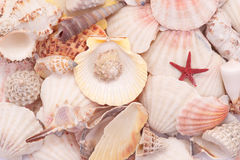 Seashells in closeup. Macro.Background Royalty Free Stock Image