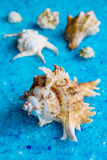 Seashells, closeup Royalty Free Stock Image