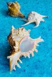 Seashells, closeup Royalty Free Stock Images