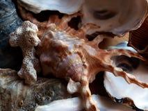 seashells closeup Ricordo dell'estate Nella pratica di Feng Shui - la conchiglia è il simbolo di buona fortuna nell'affare fotografia stock