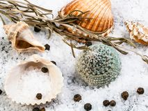 Seashells, coarse grained Sea Salt and peppercorn. S close up royalty free stock images